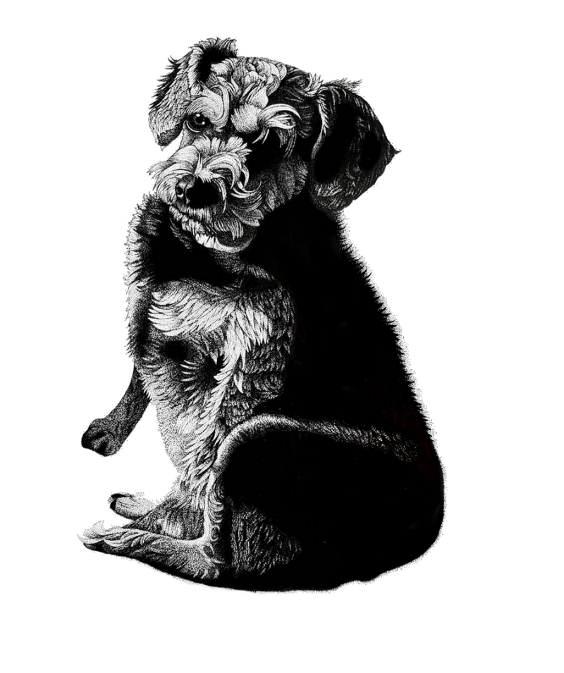 Australian drawing pen. Portraits oil paintings illustrations