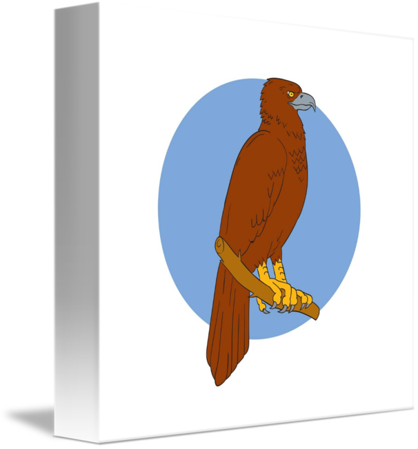 Australian drawing wedge tail eagle. Tailed perch by aloysius