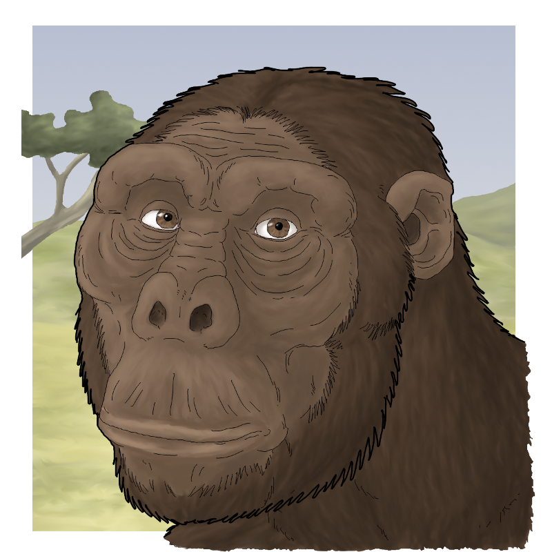Australopithecus drawing male. Afarensis portrait by wsnyder