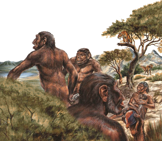 australopithecus drawing advanced
