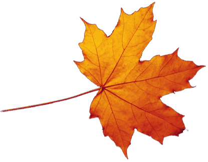 Autumn leaves falling png. Transparent catch a star