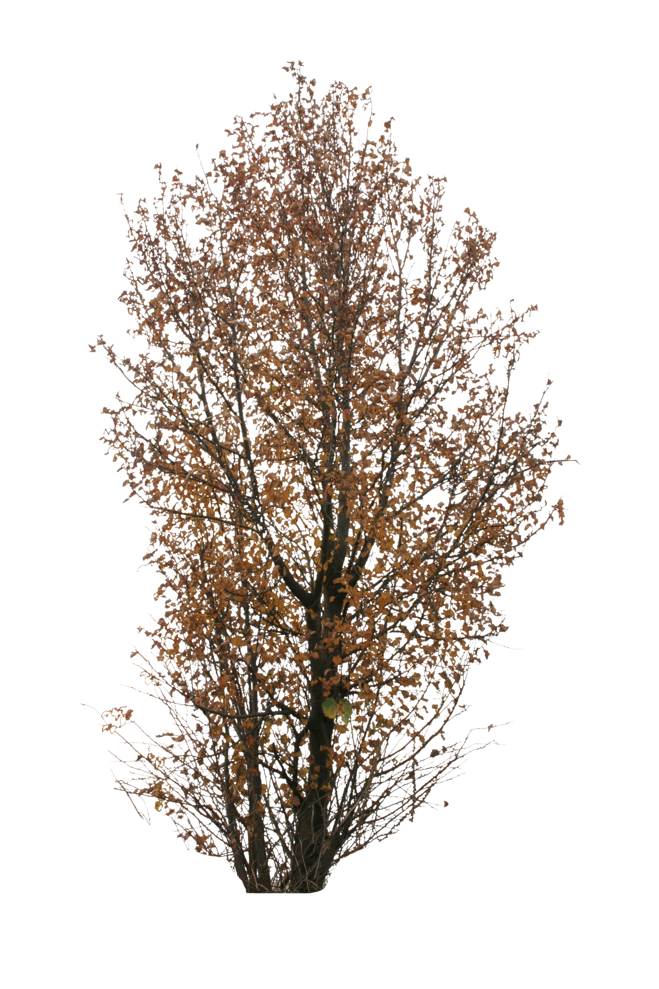 Autumn tree png. Big free cut out