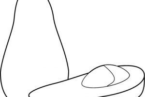 Avocado clipart outline. Free drawing