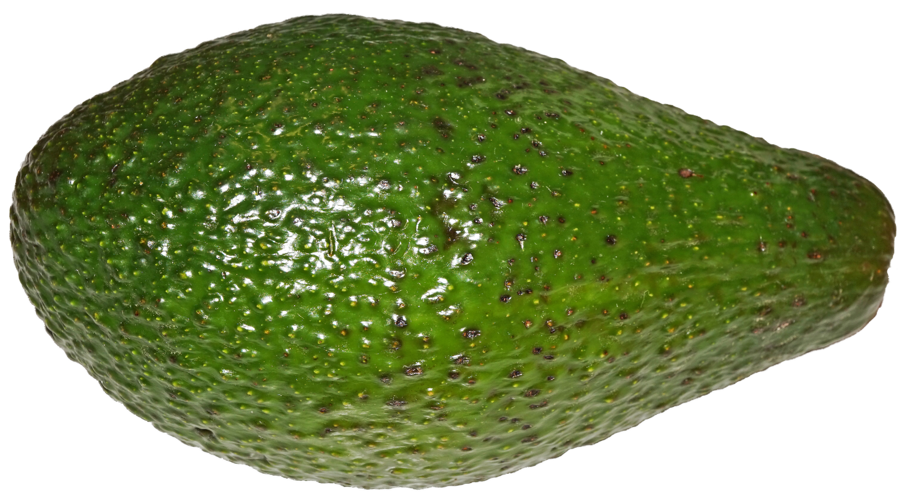 Avocado png. File wikimedia commons fileavocadopng
