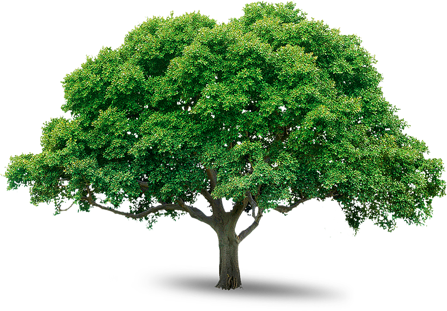 big trees png