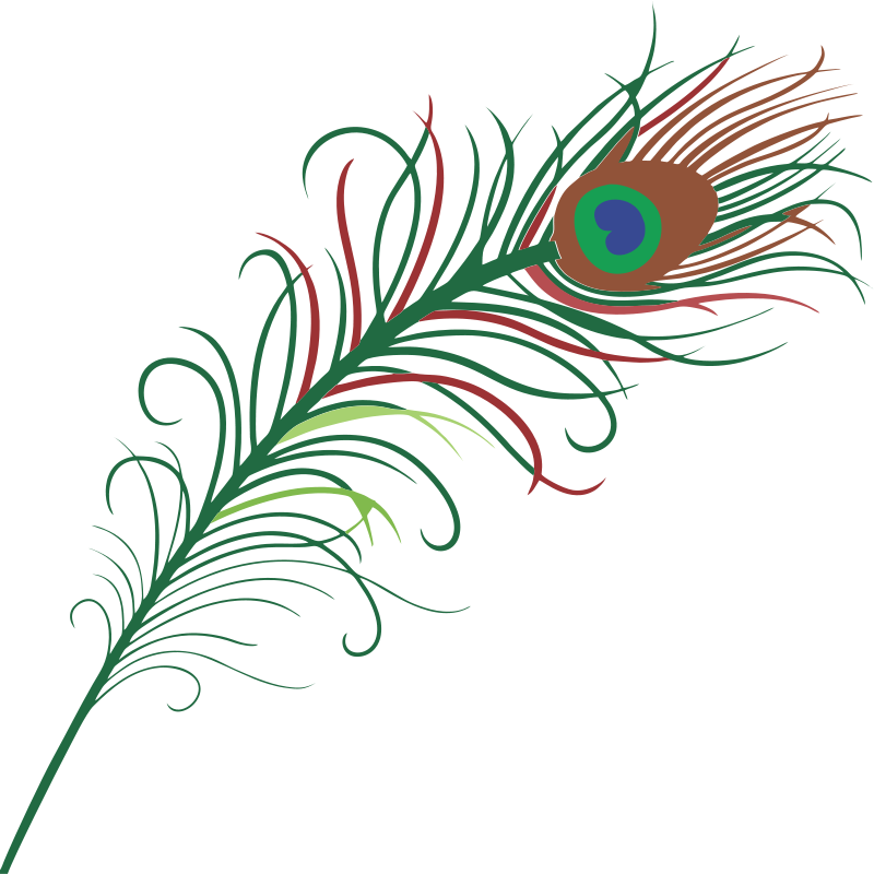 Fur vector bird feather. Free cute cliparts download
