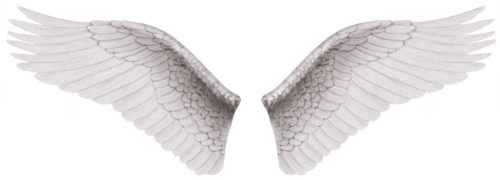 Baby angel wings png. Images free download white