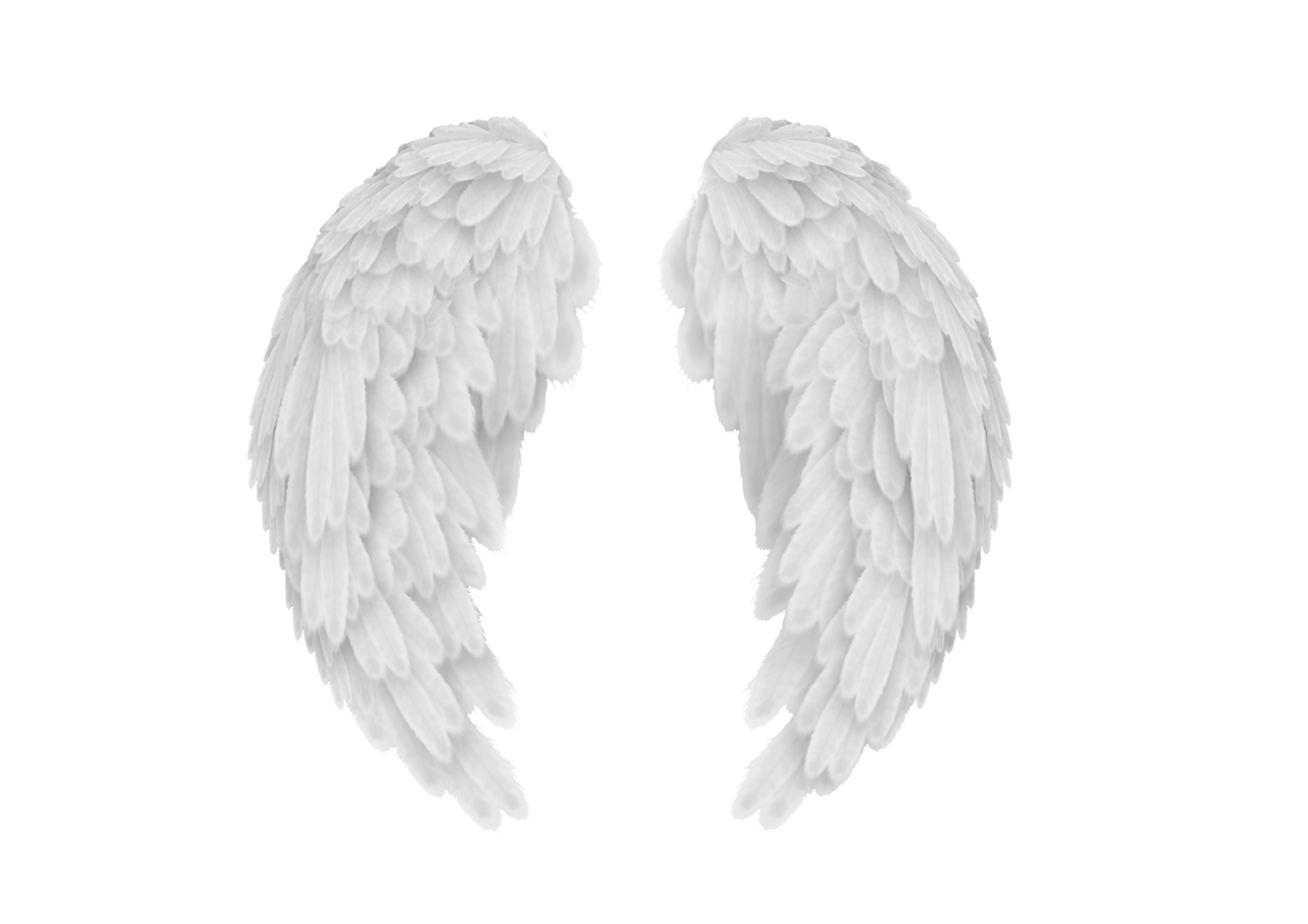 Baby angel wings png. White transparent image arts