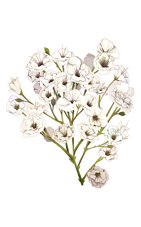 Baby breath flower png. S