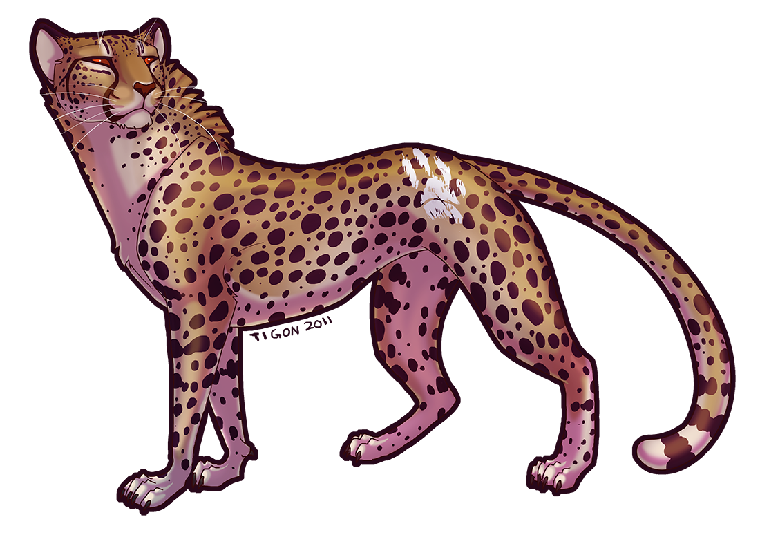 cheetahs drawing boy