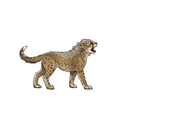 Baby cheetah png. Unofficial karma event list