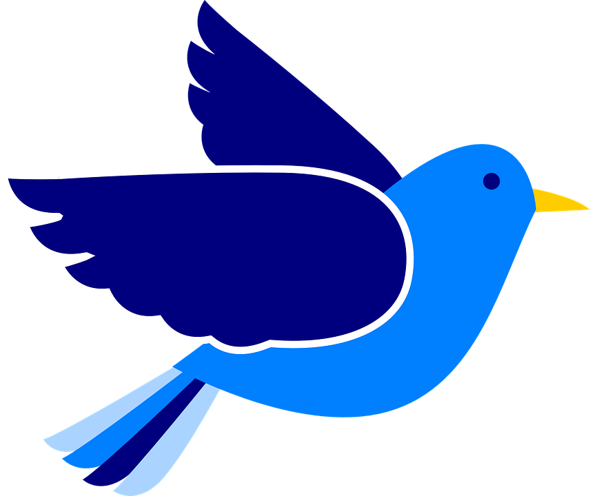 Baby clipart blue bird. Jay for free download