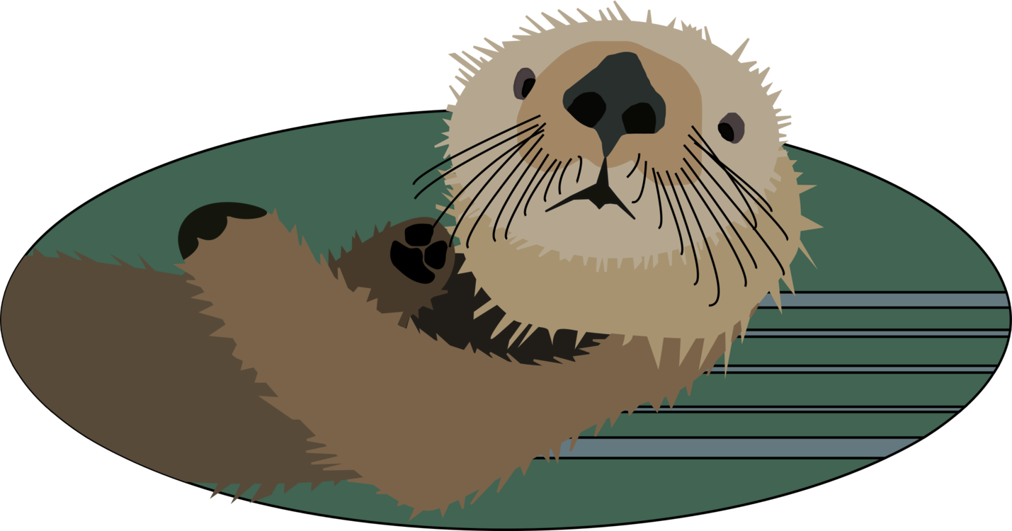 Muskrat drawing north american. The sea otter vertebrate