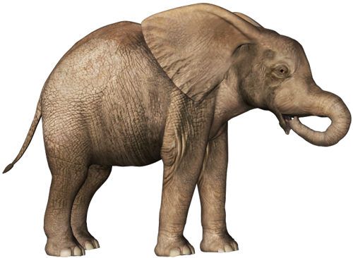 Baby elephant png. Clipart free icons and