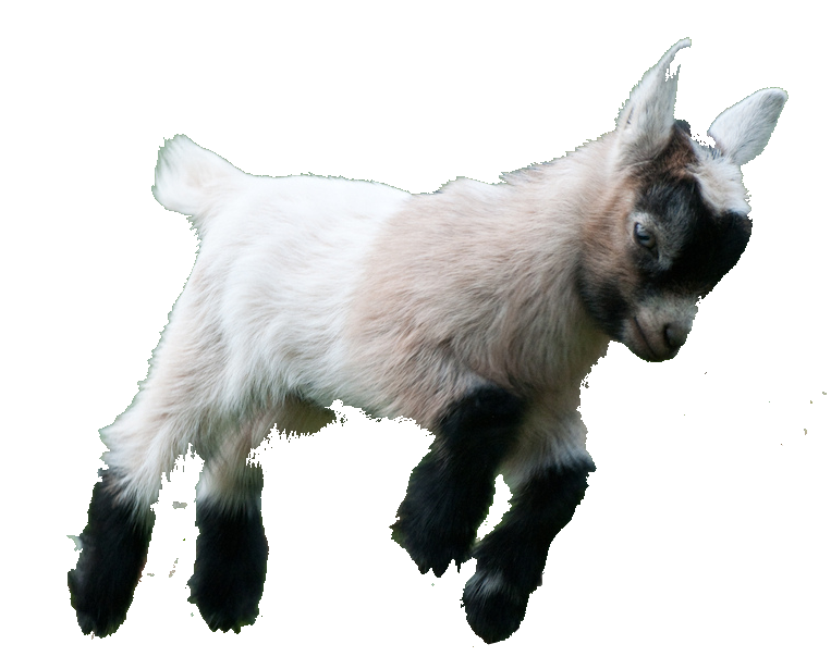 Baby goat png. Image result for transparent