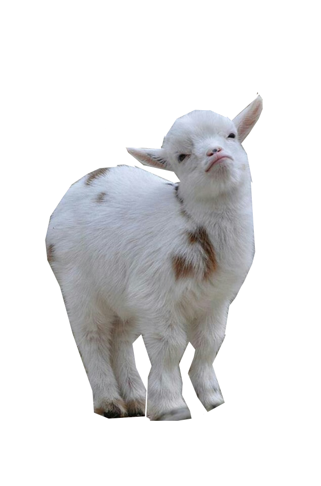 Baby goat png. Goats one must either