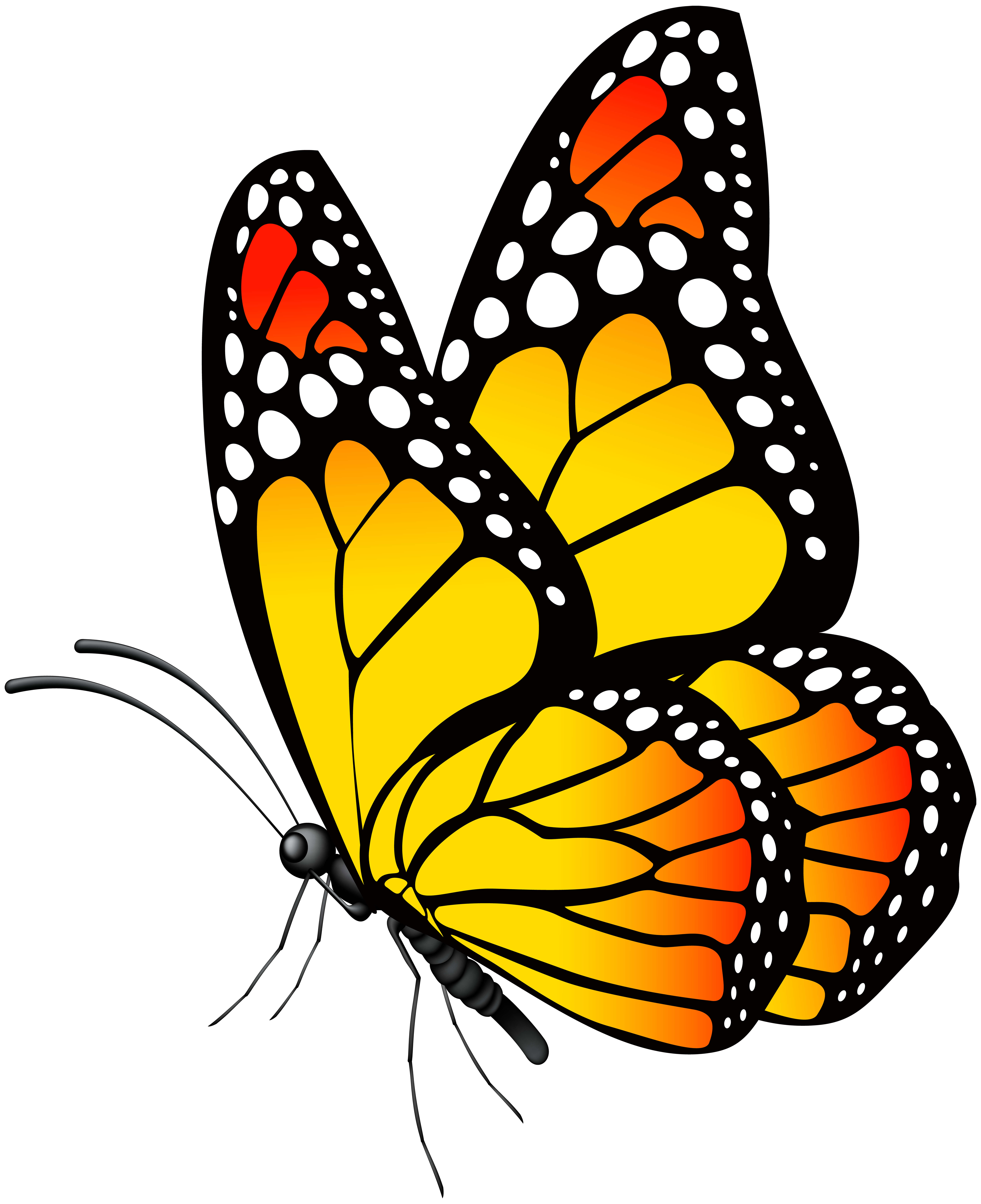 Yellow butterfly png. Monarch clipart at getdrawings