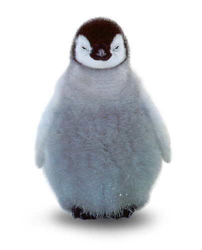 Baby penguin png. Project michelle champalanne