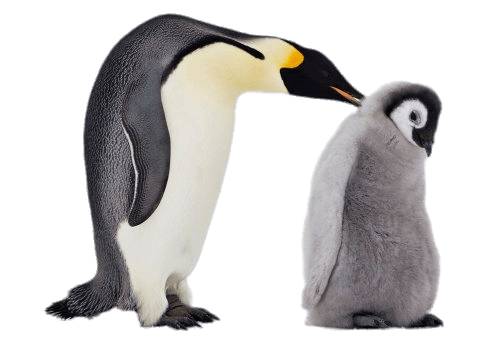 Baby penguin png. Mum and transparent stickpng