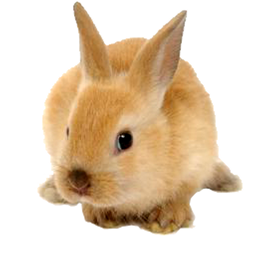Cute rabbit png. Free icons and backgrounds