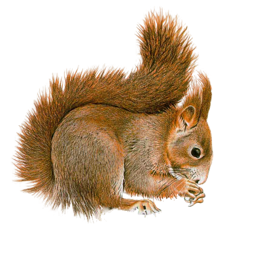 Baby squirrel png. By lg design on