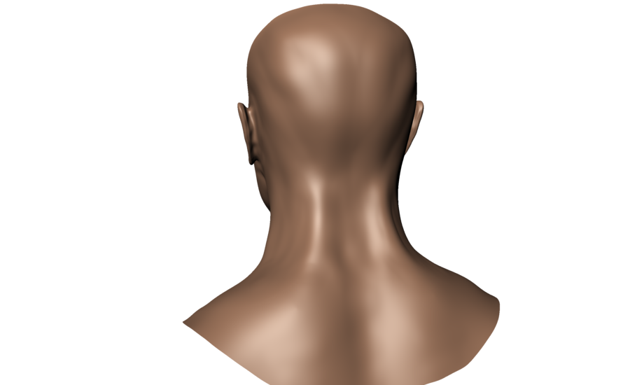 Back of head png. Human view by undeadstawa