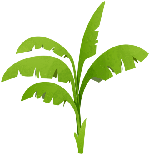 Background clipart plant. Download green transparent png