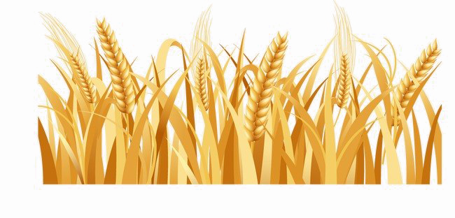 Background images png. Harvested wheat image arts