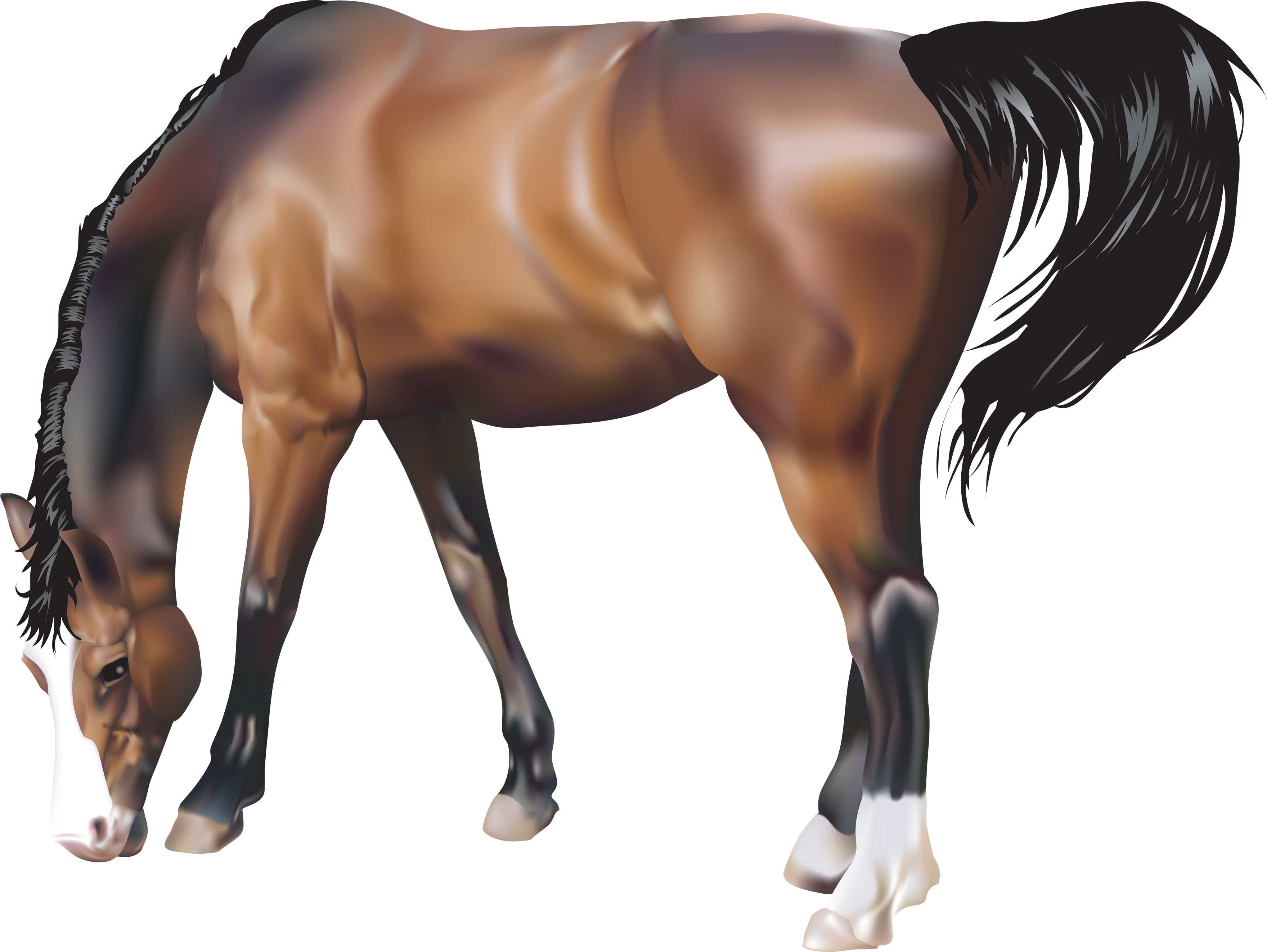 Transparent horses translucent. Brown horse png image