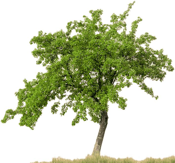 Background trees png. Download free high quality