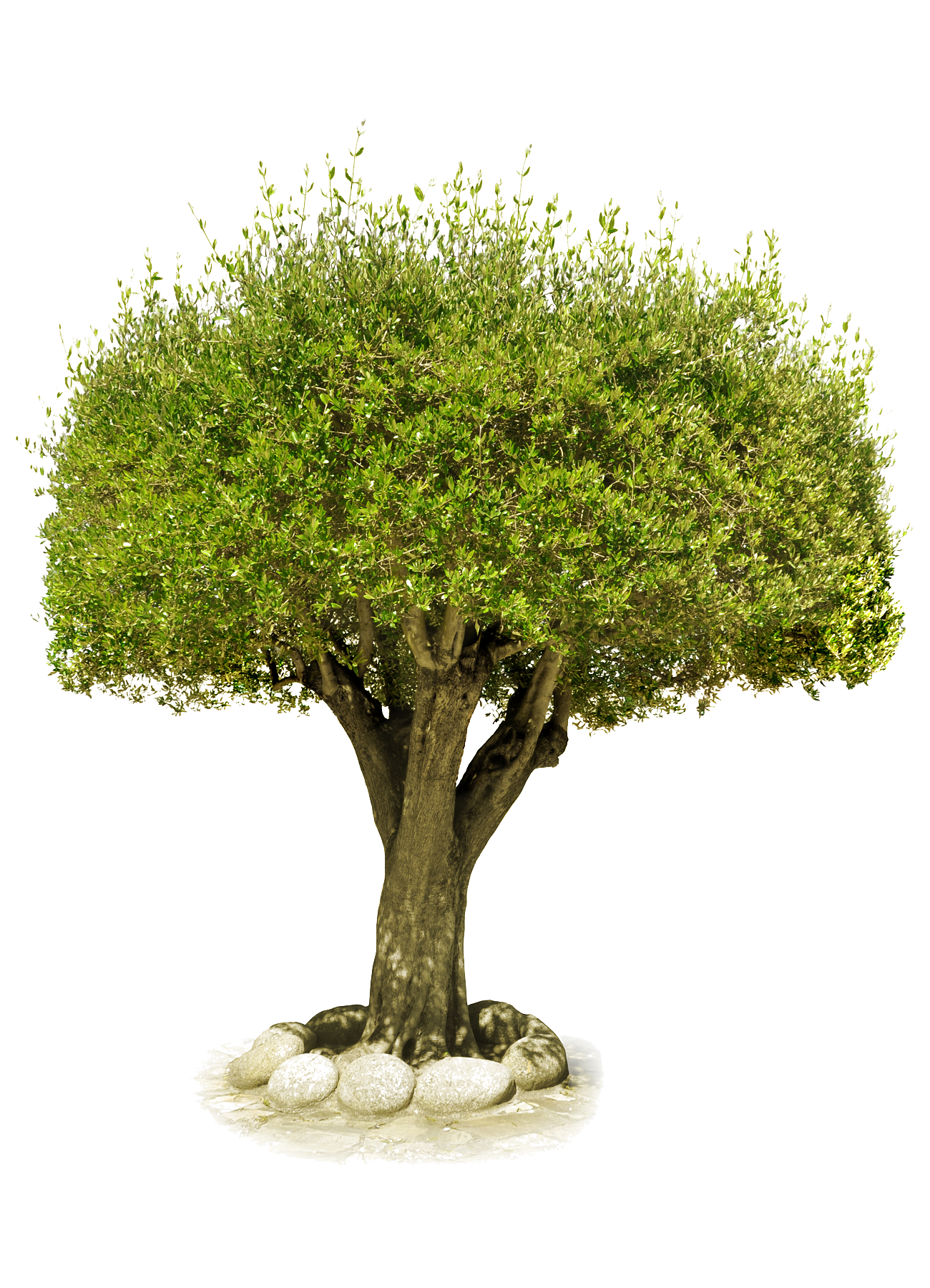 Png pictures free download. Tree image purepng transparent