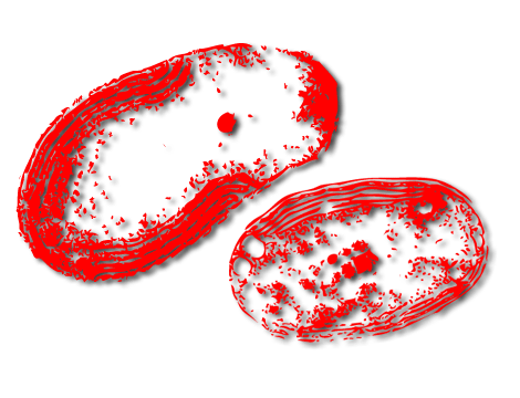Bacteria png angry. The shocking truth about