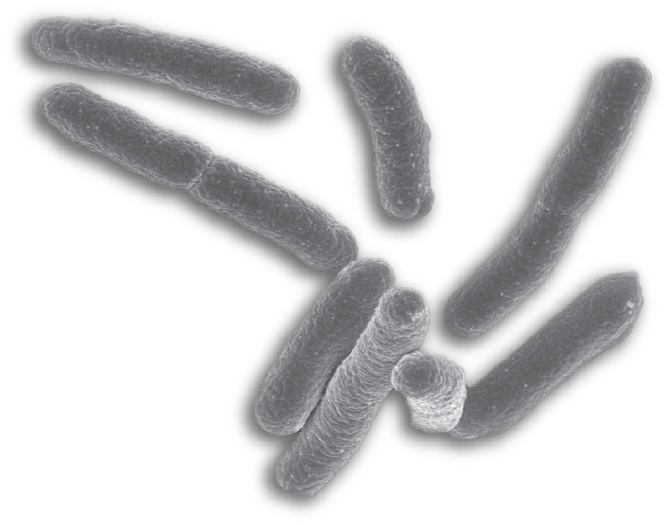 bacteria png single