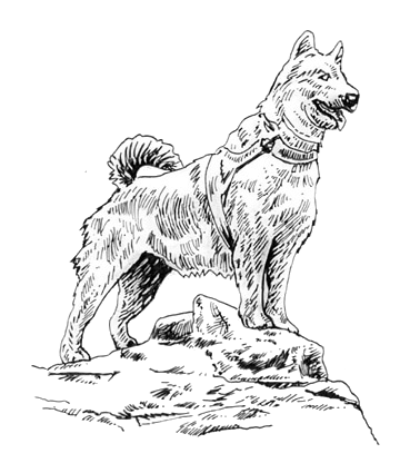 18 Balto drawing black and white for free download on YA-webdesign
