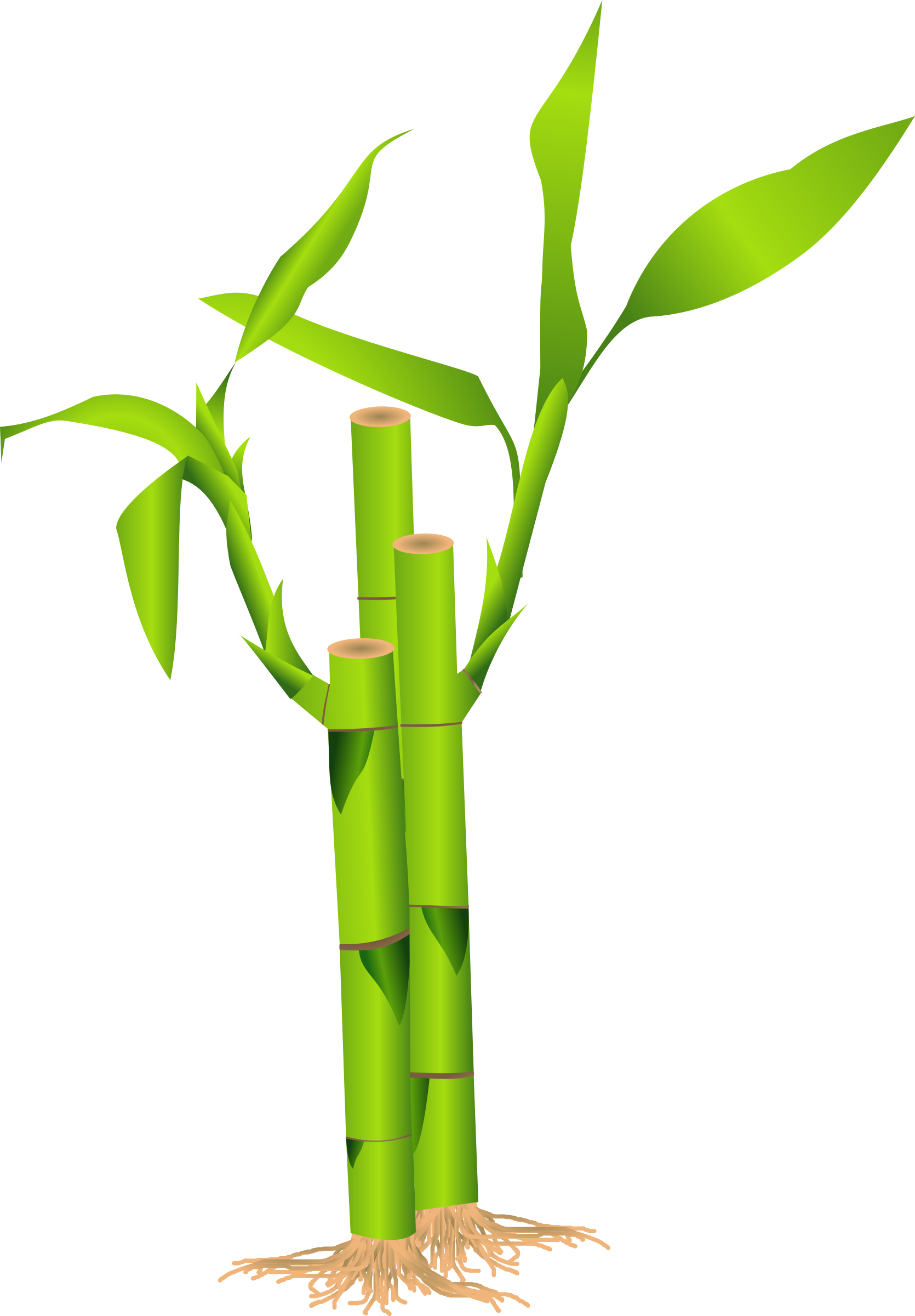 Bamboo vector png. Clipart