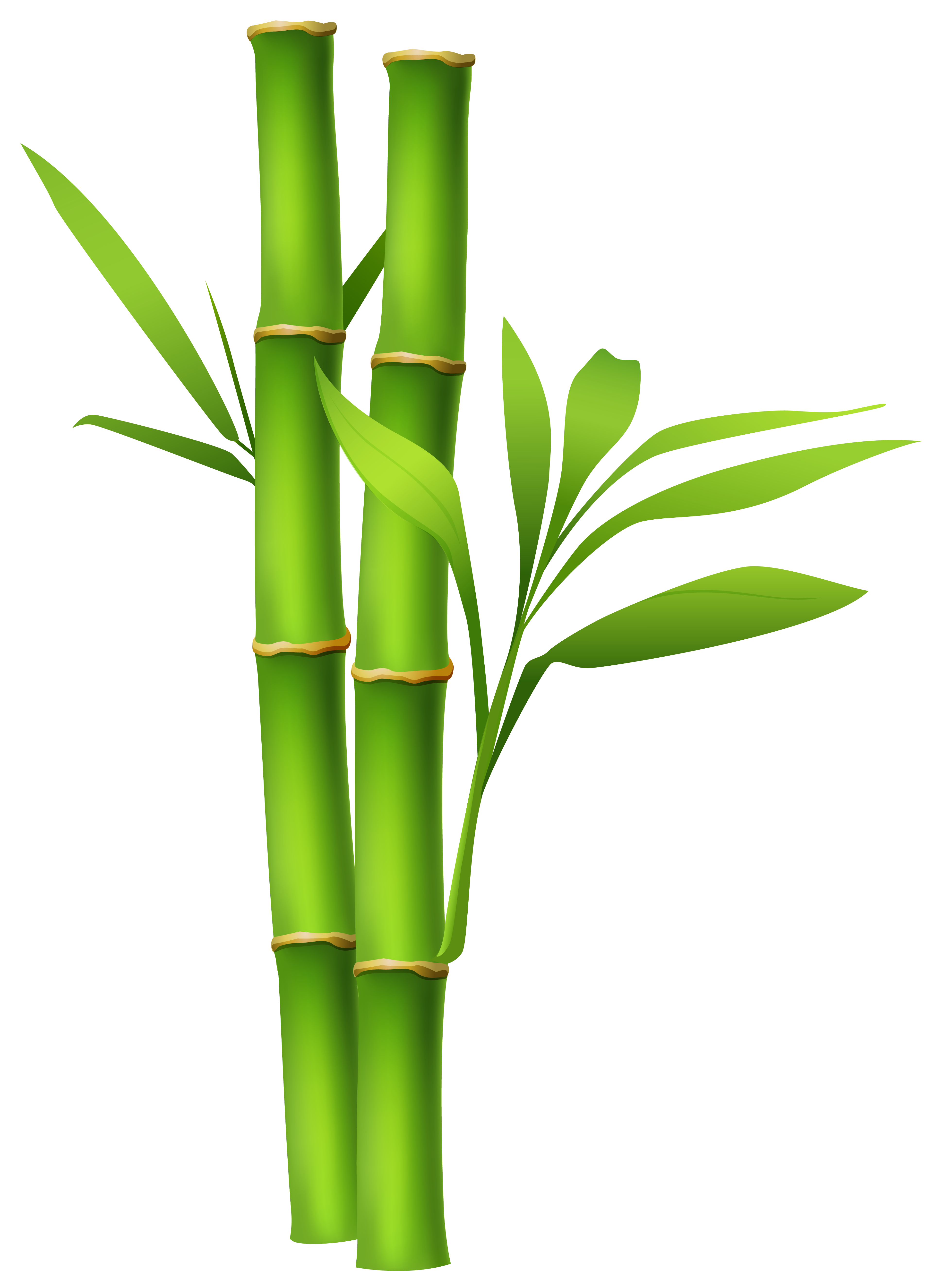 bamboo trees png