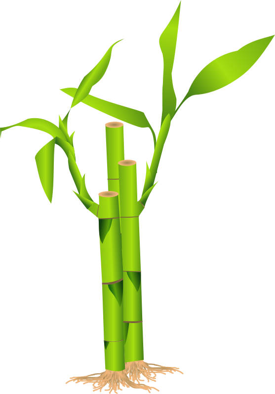 Branch . Bamboo clipart scroll picture black and white