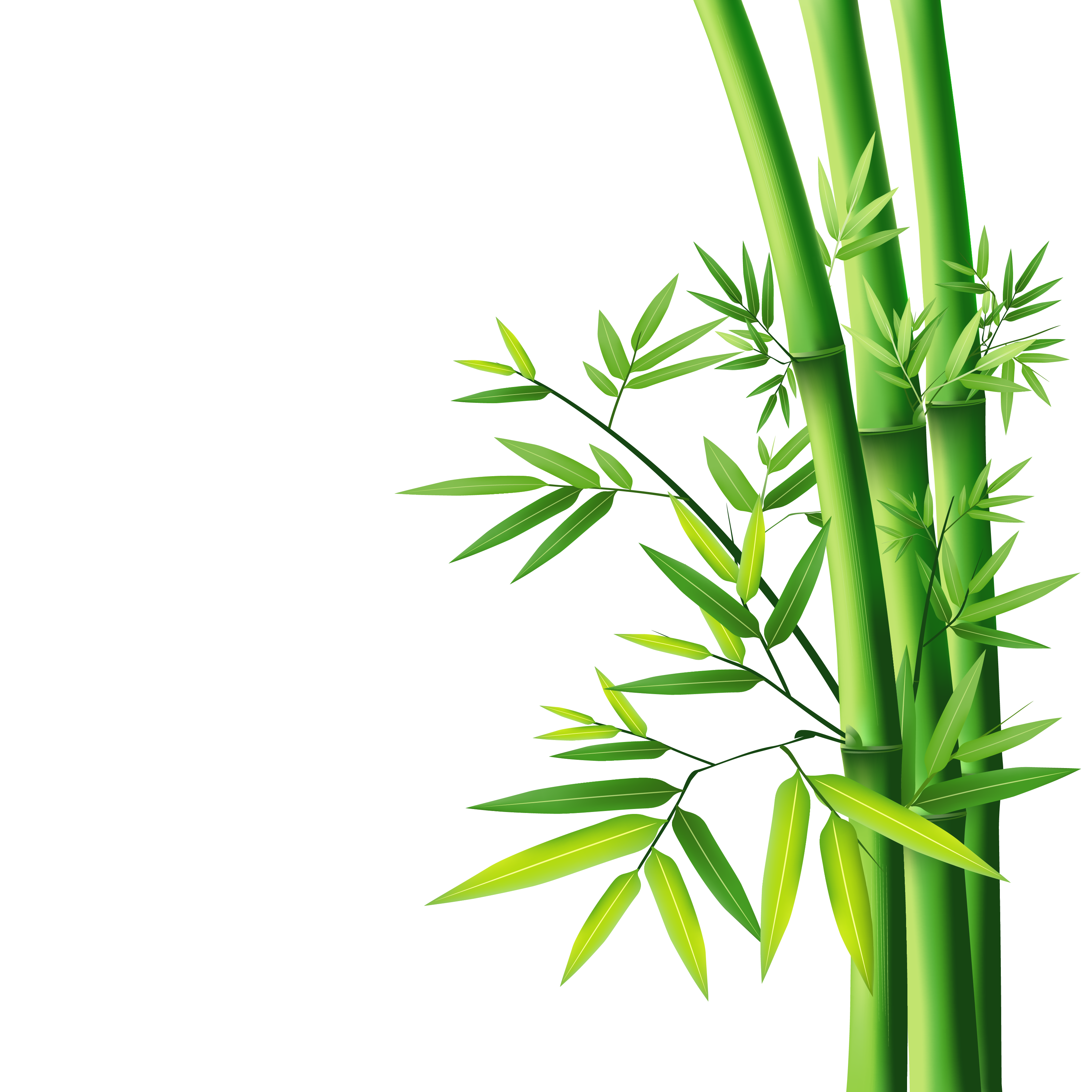 Cane transparent bamboo. Png images free download