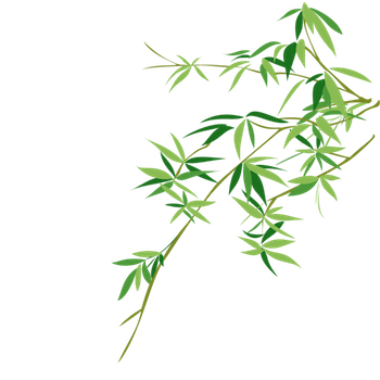 Bamboo clipart scroll. Myth aacfbecdpng