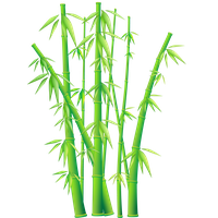 Bamboo clipart transparent background. Download free png photo