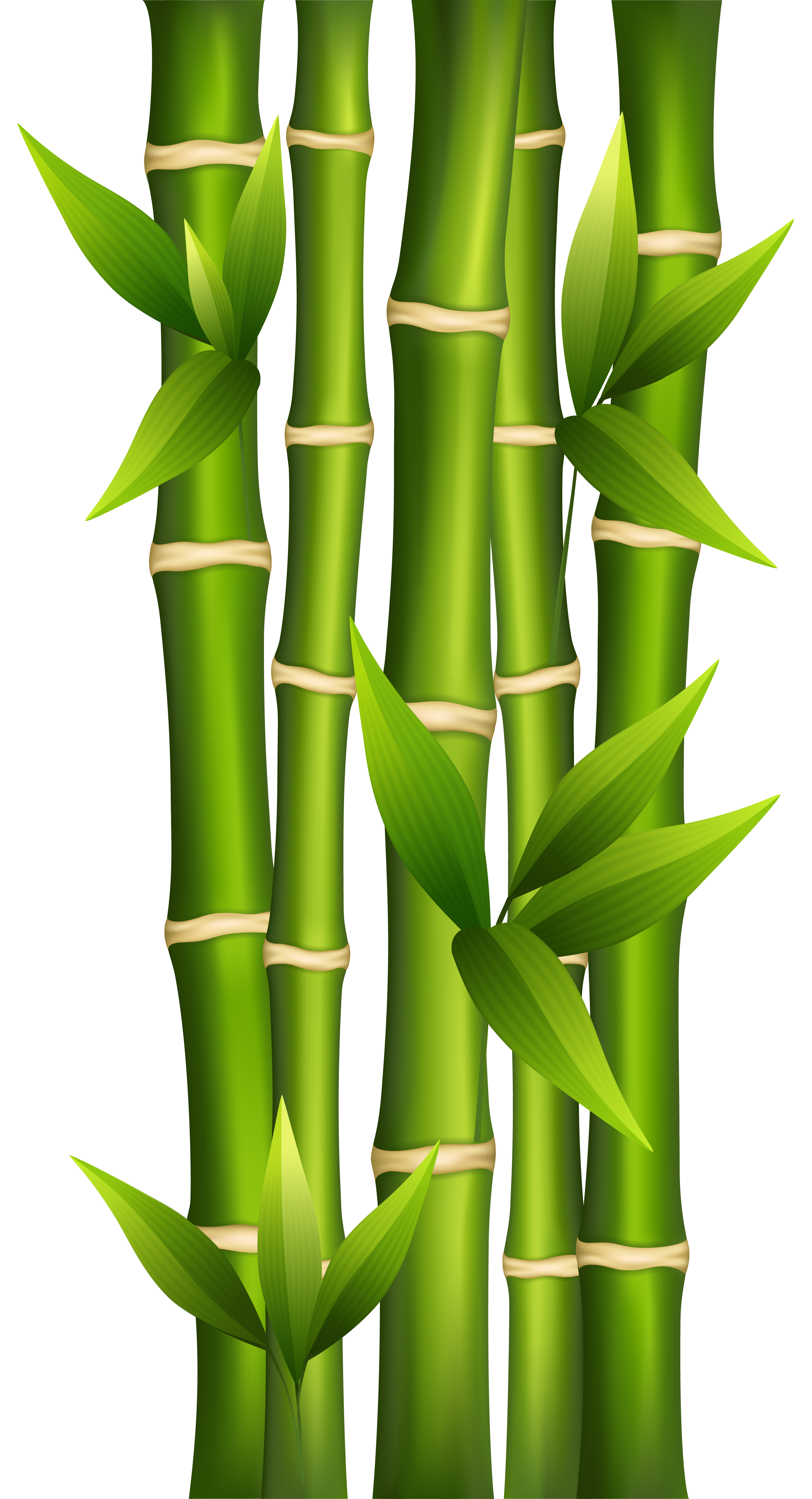 bamboo clipart transparent background