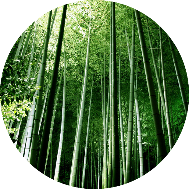 Bamboo forest png. Bg circles x aria