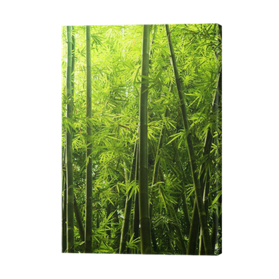 Bamboo forest png. Canvas print pixers we