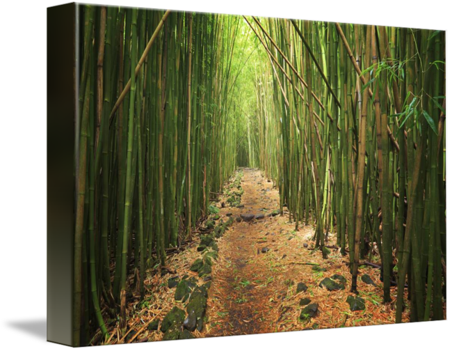 Bamboo forest png. By inge johnsson share