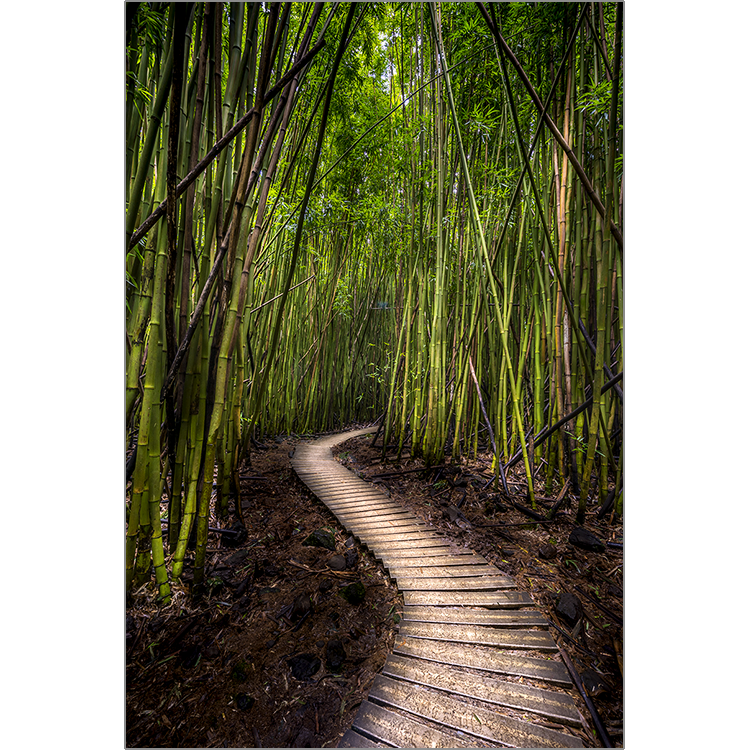 Bamboo forest png. The deserio gallery