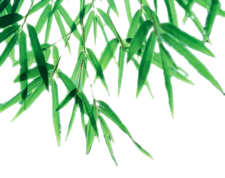 Bamboo leaf png. Picture mart