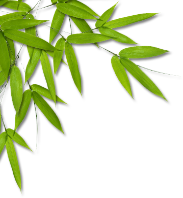 Bamboo leaf png. Clip art graphics orientpng