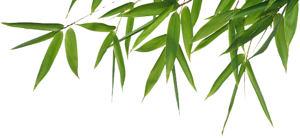 Bamboo leaves png. Transparent images all free