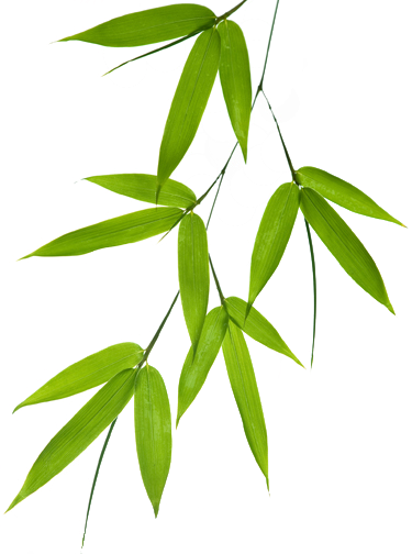 Bamboo leaves png. Wallpaper with leaf motif
