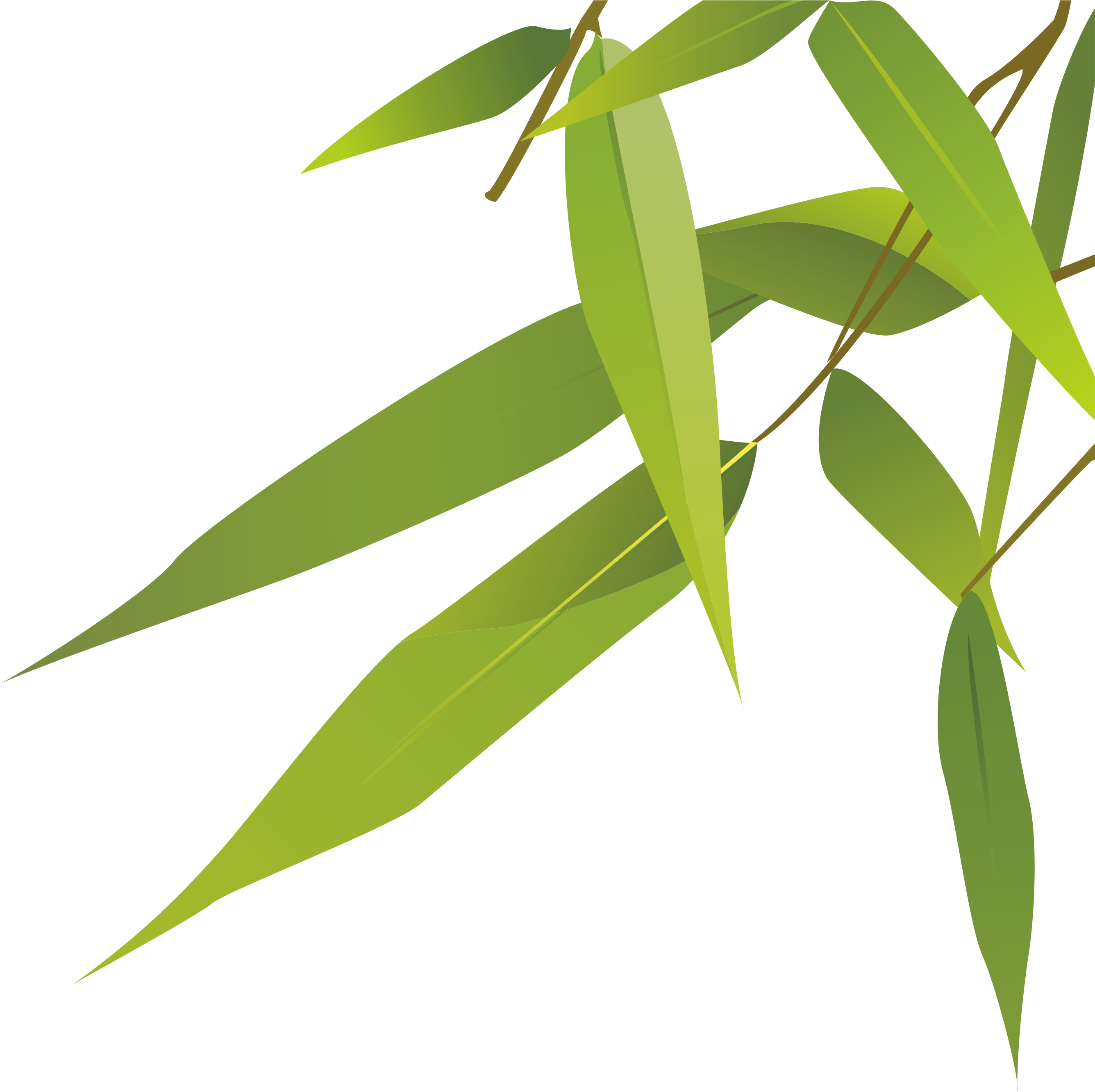 Bamboo leaves png. Zongzi dragon boat festival